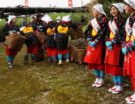 Праздник чайного урожая отмечают в Японии. Фото: Buddhika Weerasinghe/Getty Images