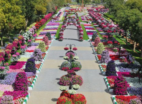 Парк в Эль-Айне: цветочные сады в пустыне. Фото: reinventingstars.blogspot.ru