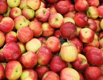 Яблоки. Фото РИА Новости