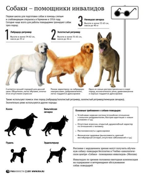 Собаки -  помощники инвалидов