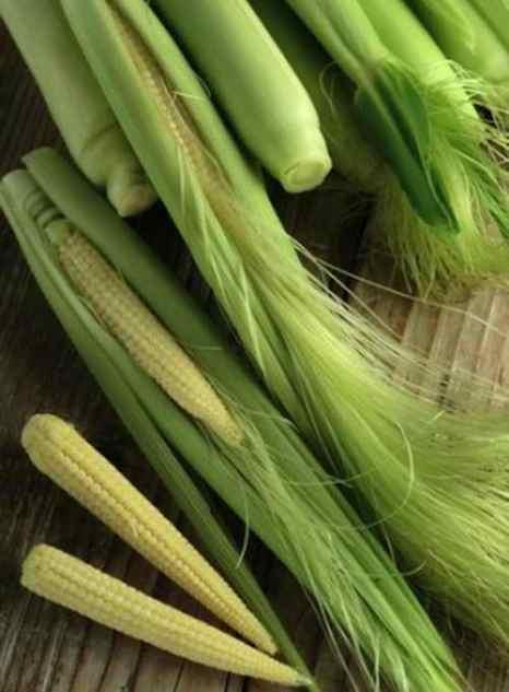 Детское зерно (кукуруза) — обычное зерно, которое собрано до опыления растения. Фото: Shutterstock*