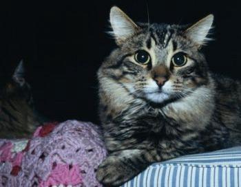 Вы капаете коту глазные капли? Фото: Photos.com