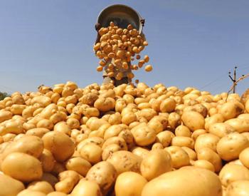 Картофель признан самым богатым источником витаминов. Фото: SAM PANTHAKY/Stringer/AFP/Getty Images