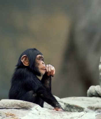 Вероятно, впервые вирус иммунодефицита обезьян появился более миллиона лет назад. Фото: Brand X Pictures/Getty Images
