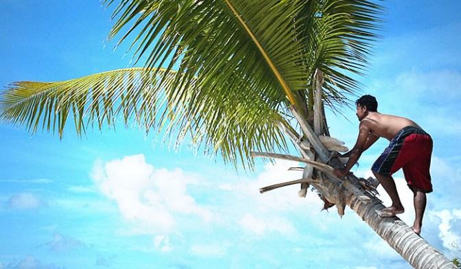 В качестве источника жирных кислот лучше использовать кокосовое масло. Фото: TORSTEN BLACKWOOD/AFP/Getty Images