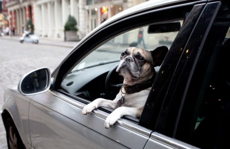 Используйте качественные аксессуары для собак. Фото: Samira Bouaou/Великая Эпоха (The Epoch Times)