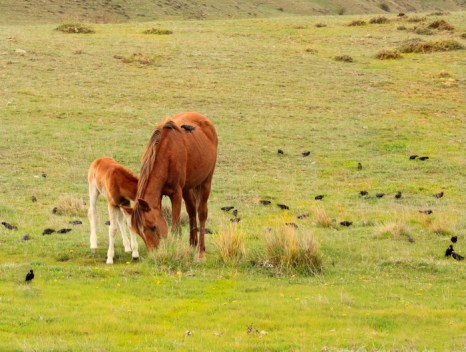 Лошади — заботливые матери. Фото: Ирина Рудская/Великая Эпоха (The Epoch Times)