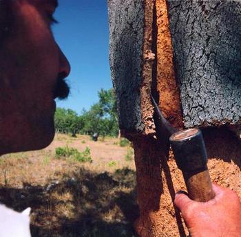 Снятие коры с дерева. Фото с сайта palto-a.ru