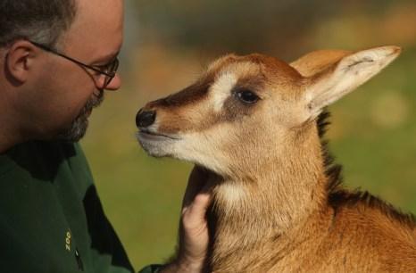 Детёныш антилопы в Берлинском зоопарке. Фото: Sean Gallup/Getty Images