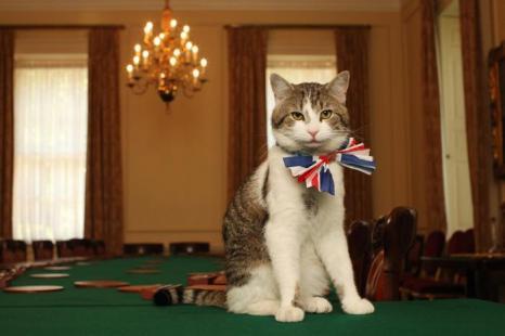 Кот британского премьер-министра Дэвида Кэмерона Ларри в кабинете номер 10 на Даунинг-стрит, 28 апреля 2011 года в Лондоне, Англия. Фото: James Glossop - WPA Pool/Getty Images