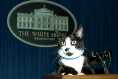 Кот Сокс Била Клинтона 19 марта 1994 года. Фото: JENNIFER YOUNG/AFP/Getty Images