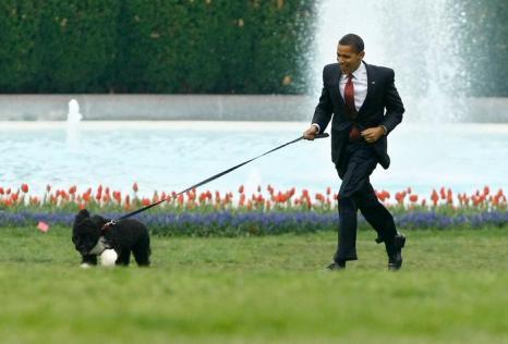 Президент США Барак Обама со своей португальской водяной собакой Бо, 14 апреля 2009 года. Фото: Chip Somodevilla / Getty Images