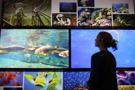Виды вымирающих животных. Фото: Peter Macdiarmid/Getty Images