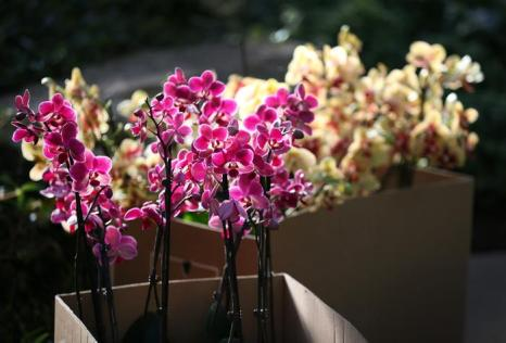 Красивые орхидеи. Фото: Peter Macdiarmid/Getty Images