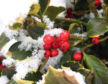 Корни многих традиций зимнего солнцестояния восходят к дохристианскому периоду. Фото: Карстен Фрелих/Pixelio