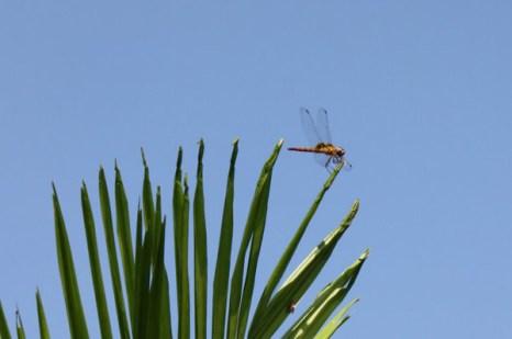 Стрекоза - поклонница природного совершенства. Фото: Екатерина Смирнова