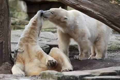 Медведь-лирик.Радостное приветствие. Фото:Getty Images