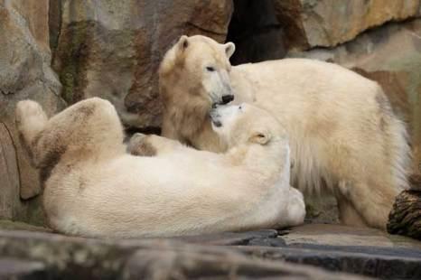 Медведь-лирик.Жизнь хороша! Фото:Getty Images