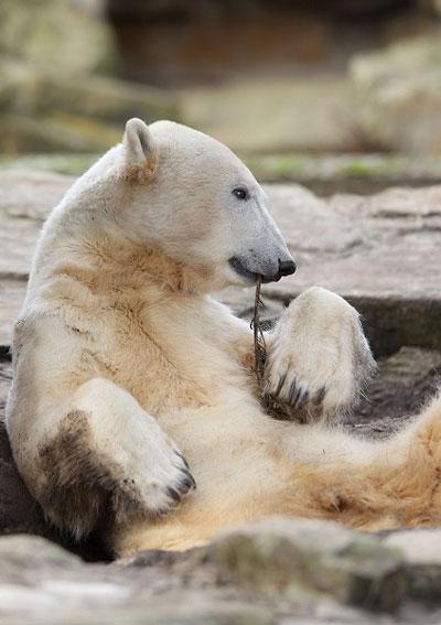Медведь-лирик.Сочинить стихи что ли? Фото:Getty Images