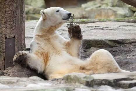 Медведь-лирик.Какой аромат! Идея! Фото:Getty Images