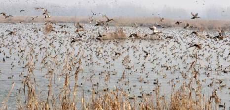 Скопление миграционных птиц. Фото:  ROUF BHAT/AFP/Getty Images