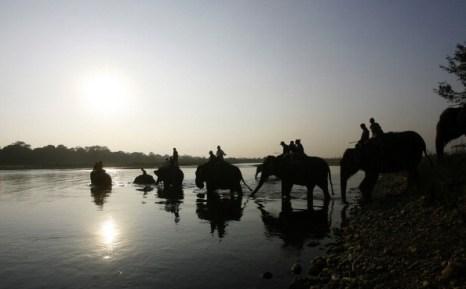 Слоны с погонщиками на спинах пересекают реку Rapati.  Национальный парк Непала. Фото: PRAKASH MATHEMA/AFP/Getty Images