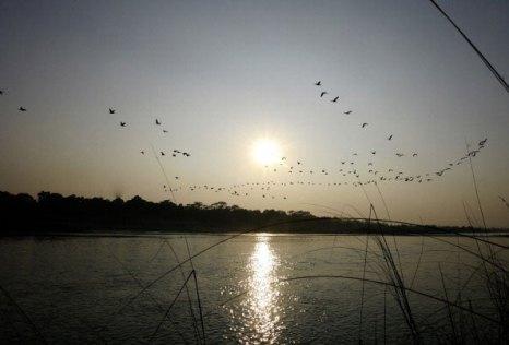 Стаи птиц на закате.  Национальный парк Непала. Фото: PRAKASH MATHEMA/AFP/Getty Images