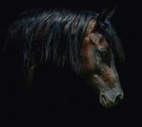 Грация и красота лошадей. Фото с сайта animalworld.com.ua