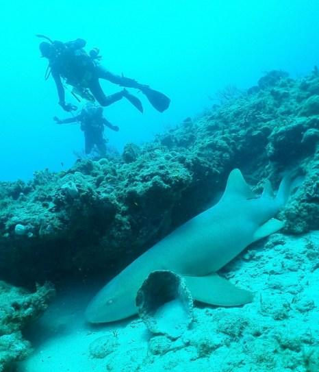 Укрывшаяся под выступом акула-нянька позволила аквалангистам с Wet Temptations рассмотреть себя вблизи. Фото: John Christopher Fine