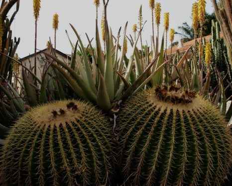 Кактусы Израиля. Теплица Регева. Фото Хава ТОР/Великая Эпоха