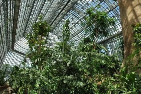 Высока и полна света большая тропическая оранжерея Фото: © I. Haas, Botanischer Garten und Botanisches Museum Berlin-Dahlem