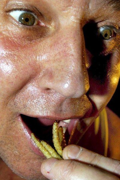 Туристы, путешествуя, обычно пробуют новые блюда. И все большему количеству туристов насекомые приходятся по вкусу. Взять, к примеру, хотя бы этого австралийца. Фото: bigpicture.ru
