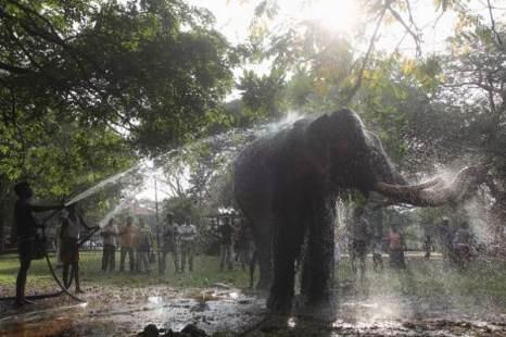 Фестиваль Navam Perehara в Шри-Ланке. Фото:Michael Steele/Getty Images