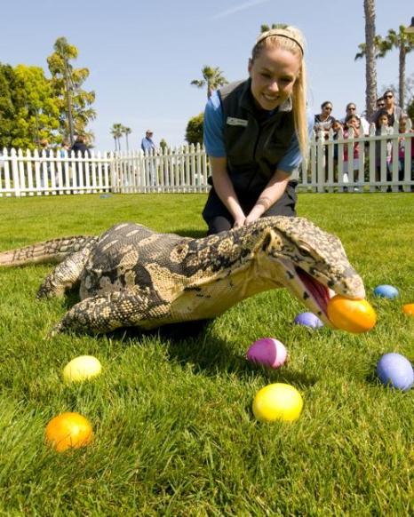 Животные в парке Морской мир и их звёздные друзья. Фото: Rigo Diaz/SeaWorld San Diego via Getty Images