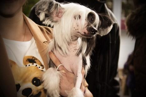 Всероссийская выставка собак в Абакане. Фото: Сергей Тугужеков/Великая Эпоха (The Epoch Times)