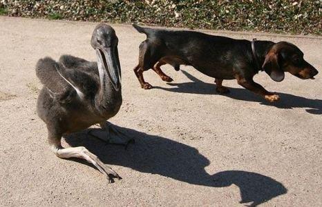 Пожалуйста, не так быстро, у меня только две ноги… Фото с сайта animalworld.com.ua