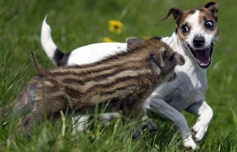 Быстрее! - Куда быстрее, я совсем с ног сбился!.. Фото с сайта animalworld.com.ua