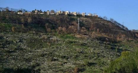 Кармель оживает снова. Фото с сайта guyshachar.com
