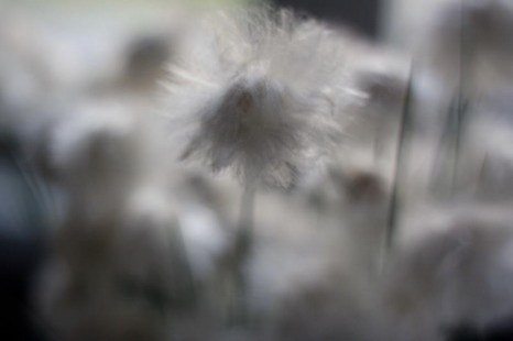 Мир сквозь фотомонокль Марии Вяткиной. Фото: Мария Вяткина