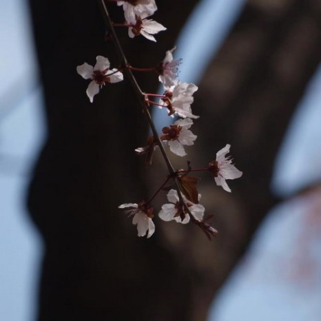 Мартовский ЦИкл. Фото: Хава Тор/Великая Эпоха (The Epoch Times)