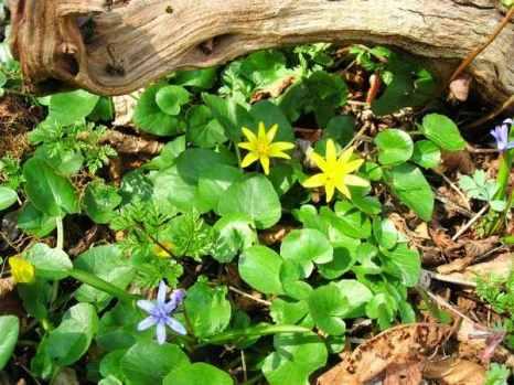 Крым. Пятая балка. Весенние цветы в горном Крыму. Фото: Алла Лавриненко