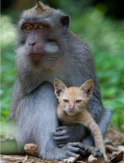 Животные в природе. Фото:xaxor.com