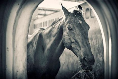 Лошади. Фото:xaxor.com