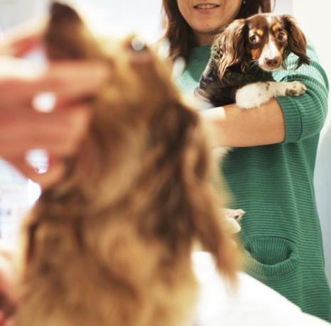 Маленькая Ванилька не на шутку растревожилась, наблюдая за лечением своей подружки Шоколадки. Фото: Adam Pretty/Getty Images