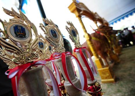 Фестиваль коровьей красоты Sapi Sonok прошёл на индонезийском острове Мадура 19 октября 2013 года. Фото: Robertus Pudyanto/Getty Images