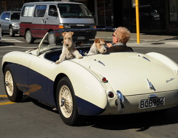 Austin Healey.  Фото:  PETER PARKS/AFP/Getty Images