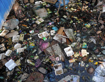 Тема о создании нового мусороперерабатывающего комплекса в Тосненском районе Ленинградской области была обсуждена более подробно. Фото: TANG CHHIN SOTHY/AFP/Getty Images
