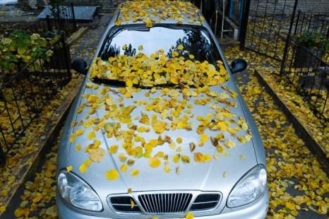 Золотая осень в Киеве. Фото: Фёдор Треногов