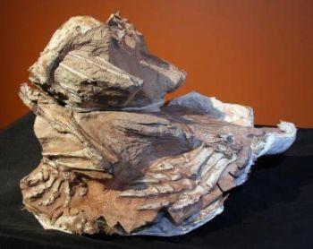 Эту окаменелость с отпечатком динозавра Seitaad ruessi обнаружили в навахских песках, в Юте. Фото: Utah Museum of Natural History/University of Utah