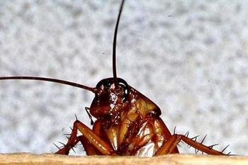 Поговорим о тараканах. Фото с сайта qrok.net